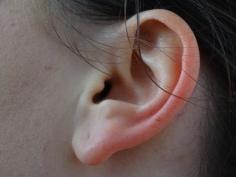 L'oreille, pour la bonne entente