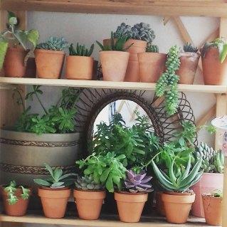 Les plantes grasses de Margaux, un autre de ses centres d'intérêt! Photo Margotte Zébulone