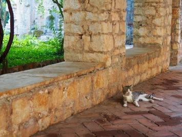 Un chat surveille les visiteurs